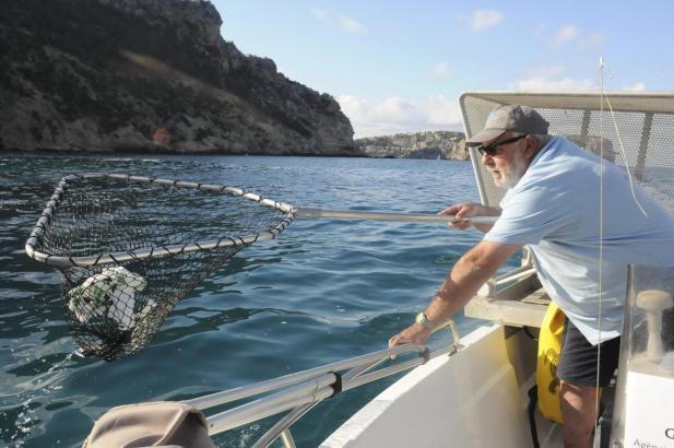 Neun Boote sind vor Mallorcas Küste im Einsatz.