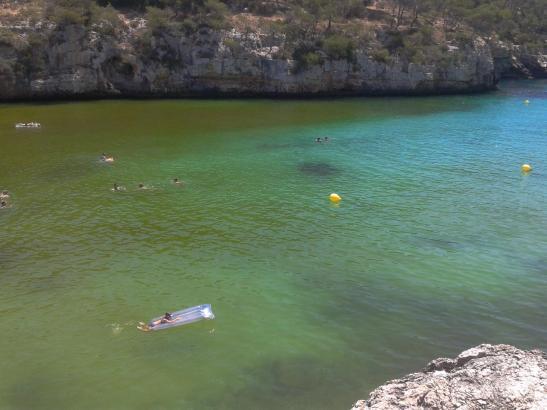 Algen in der Cala Santanyí auf Mallorca: Gefällt nicht jedem, ist aber ungefährlich.