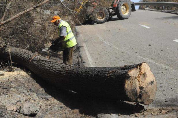 Forstbeamte beseitigen seit Tagen die Folgen des Waldbrandes.