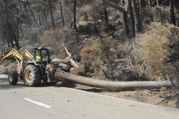 Angestellte der Forstbehörde räumen in diesen Tagen umgestürzte Bäume besiseite.