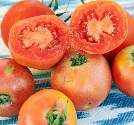 """Aufgefädelt ist die """"Tomatiga de Ramallet"""" teilweise monatelang haltbar."""