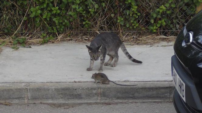 Selbst die Katzen sind sich unschlüssig, wie sie den Raten begegnen sollen.