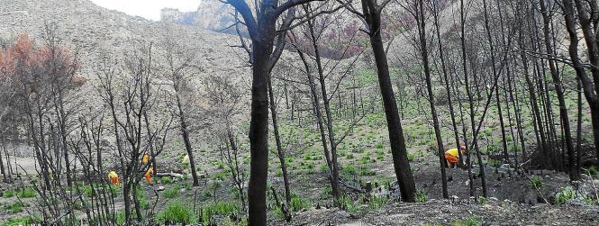 Der verkohlte Wald bei Andratx.