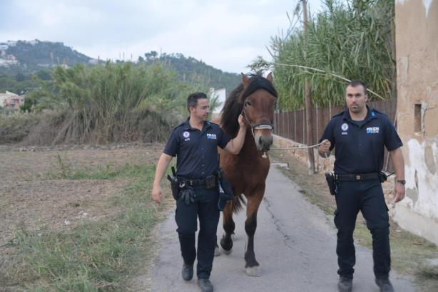 Die Dorfpolizei machte Jagd auf den Ausreißer.