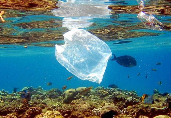 Immer mehr Plastikmüll verschmutzt die Meere und stellt eine Gefahr für die Umwelt dar.