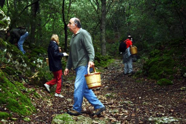 Pilzesammeln gehört zu den beliebten Hobbys der Inselbewohner.