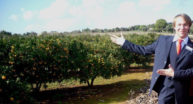 Der Alltours-Reiseleiter bei der Orangenernte in Soller auf Mallorca.
