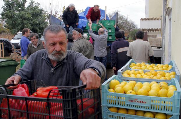 Einen Teil der Produktion spendet Mallorcas Bauernverband für soziale Zwecke.