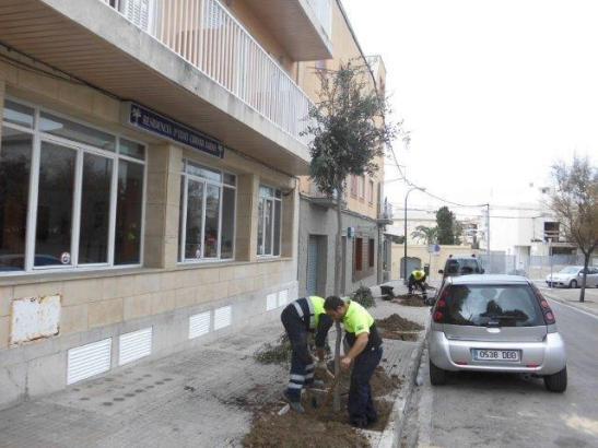 Die Arbeiten zum Anpflanzen neuer Bäume begannen bereits im Dezember.