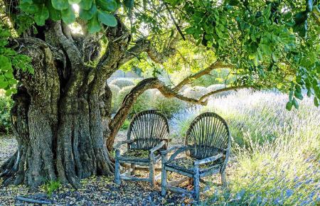 Das Buch zeigt 20 Privatgärten in ganz unterschiedlichen Lagen - Orte, an denen man gerne etwas verweilen würde.