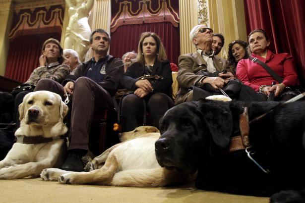 Blindenhunde und ihre Besitzer während der Abstimmung im Parlament.