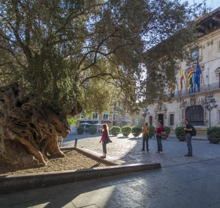 Einer der beliebtesten Plätze von Palma: Hier könnten bald drei Hotel stehen.