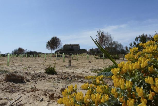 Hier stand vor einem Jahr noch die Bauruine von Ses Covetes am Es Trenc-Strand.