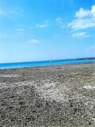 Posidonia so weit das Auge reicht: So sieht es derzeit an der Playa des Peregons Petits bei Colònia de Sant Jordi aus.