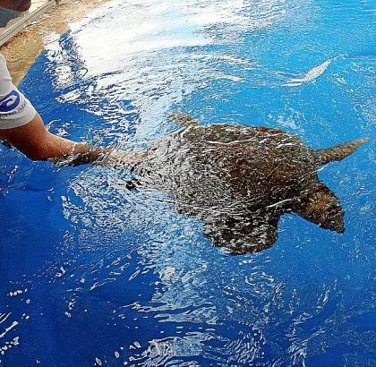 """Im Meerwasserbecken im """"Marineland"""" werden die Schildkröten wieder gesund gepflegt."""