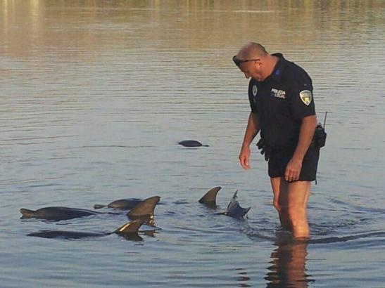 Polizisten und Meeresbiologen bemühten sich um die gestrandeten Delfine.