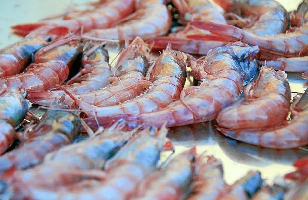 Die Garnelen-Art aus den Fischgründen Mallorcas ist für ihre tiefrote Farbe bekannt und wird auf den Märkten als Delikatesse geh