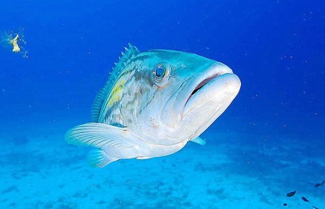 Er lebt bei Mallorca, unter Wasser.