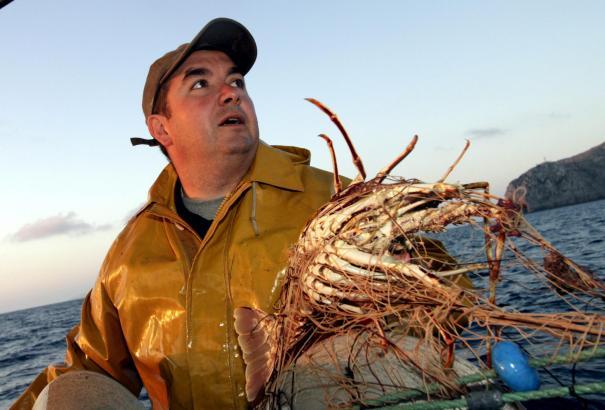 Mallorcas Fischer klagen über niedrige Langustenpreise.