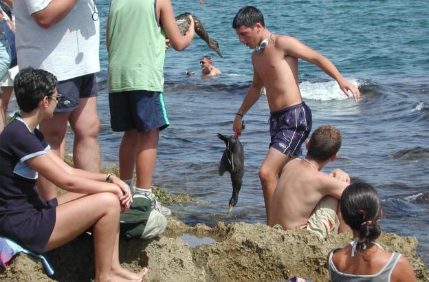 Als das Entenwerfen in Can Picafort noch mit lebenden Tieren begangen wurde.  Archivfotos aus dem Jahre 2001.