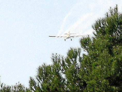Auch mit Flugzeugen wird das Insektizid flächendeckend in die Natur gesprüht.