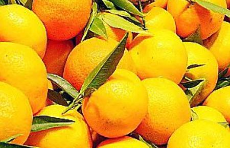 Clementinen in der Markthalle in Palma de Mallorca.