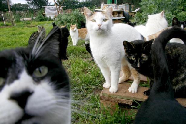 Das Archivfoto zeigt eine freilebende Katzenkolonie auf Menorca.