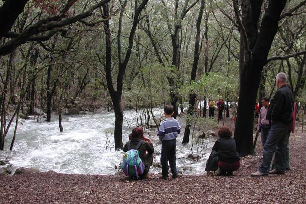 Wenn die Quellen von Campanet rauschen, kommen bis zu 10.000 Menschen an einem Tag, um das Naturschauspiel zu bewundern.