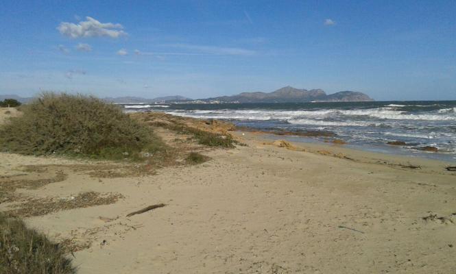 Der Strand Na Patana im Norden Mallorcas wird ganzjährig für Hunde geöffnet.