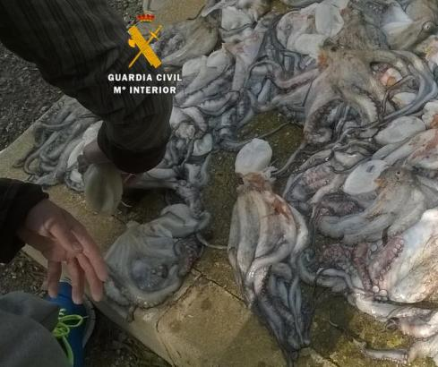Ein dicker Fang: 25 Tintenfische zog ein Mann vor Alcanada aus dem Wasser.