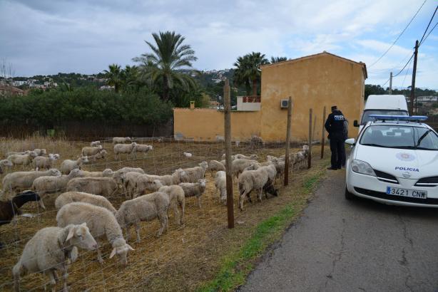 Die bei Tierschützern umstrittene Finca bei Port d'Andratx.