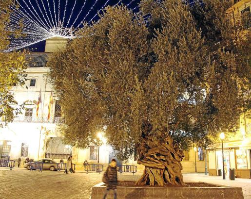 Der Olivo auf dem Rathausplatz von Palma rückt jedes Jahr in den Mittelpunkt der weihnachtlichen Beleuchtung, auch wenn er selbs