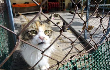 Die Tierschutzvereine müssen sich auf einen Schlag um ganz viele Katzen und Hunde (Archivfoto) kümmern.