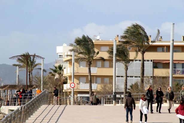Vom Winde verweht: Palmen und wackere Spaziergänger an der Playa de Palma.