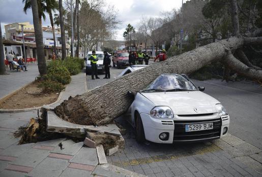 Da gibt's einiges zu reparieren: Der Clio wurde vom Baum komplett geplättet.