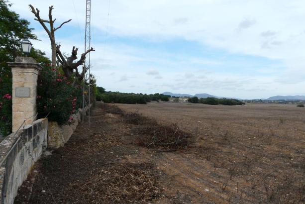 Santa Cirga: Auf diesem Gelände bei Manacor soll der Photovoltaik-Park entstehen.