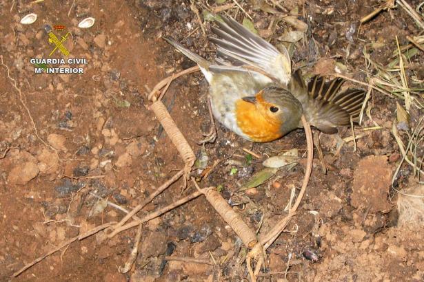 Der zappelnde Vogel wurde von der Guardia Civil aus seiner Falle befreit.