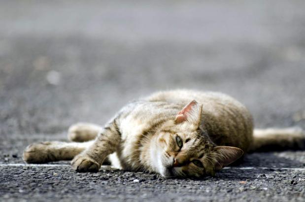Die Katzen (Symbolfoto) waren zuvor kastriert worden.