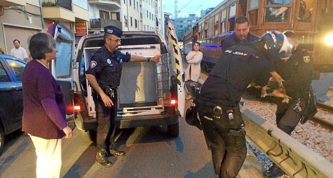 Polizeibeamte kümmerten sich um den Mann und seinen Hund.