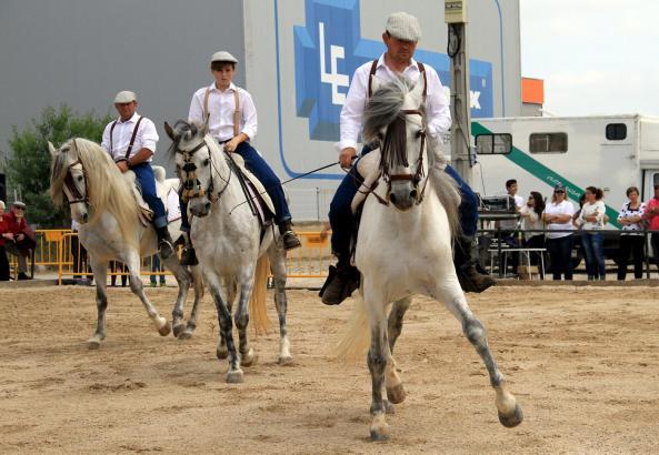 Pferdeshow auf der Feria de Abril