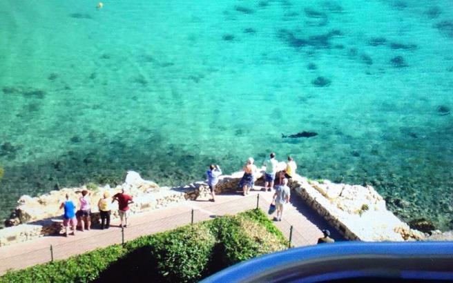 Ist es ein Hai? Urlauber und Badegäste schauen bei Palmanova gebannt aufs Meer.