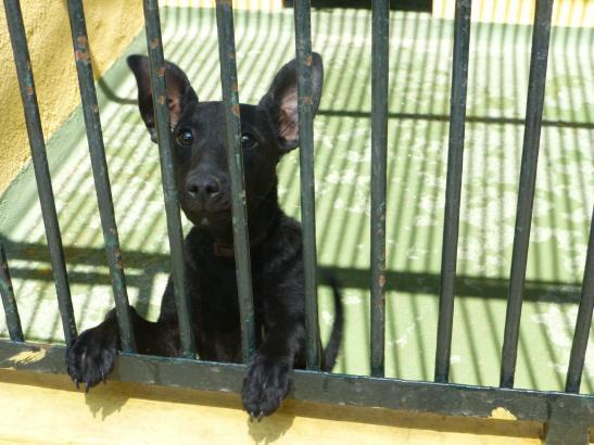 Das Tierheim Son Reus ist für viele Hunde Endstation.