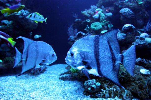 Im Palma Aquarium kann man eine große Vielfalt von Unterwasserlebewesen beobachten.