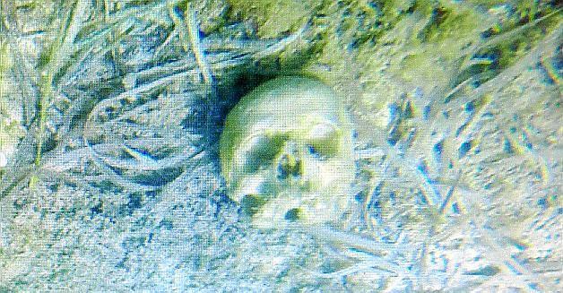 Dieser Schädel lag im Meer vor Colònia de Sant Jordi.