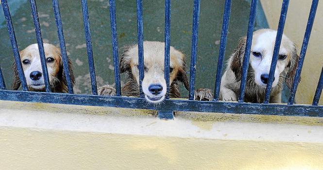 Drei Hunde, die nicht eingeschläfert wurden.