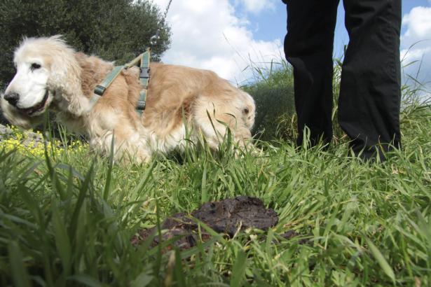 Immer wieder unschön: Achtlos hinterlassener Hundekot wie hier auf Menorca.