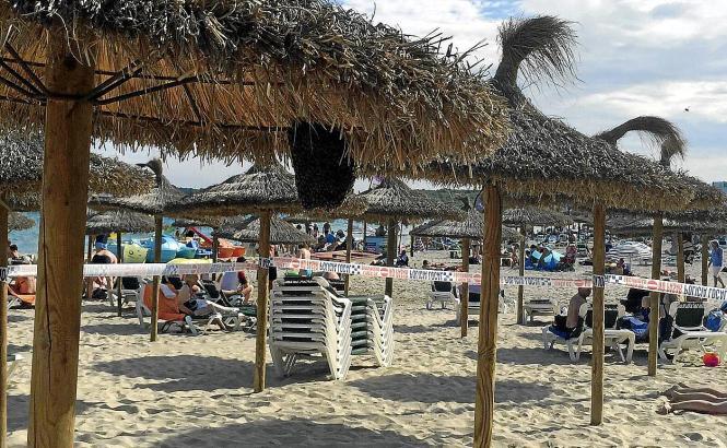 Ungebetene Strandgäste: Ein Bienenschwarm hat sich am Sonntag an einem Sonnenschirm in Cala Millor auf Mallorca eingenistet.