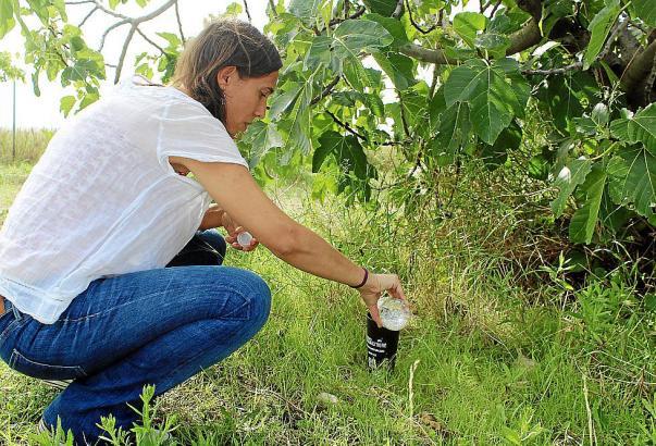 Umweltexpertin Silvia Gayà befüllt Insektenfallen in Inca