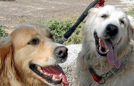 Vierbeiner am Hundestrand von Es Carnatge in Palma.