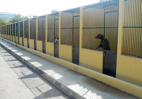 Das Tierheim Son Reus auf Mallorca.